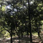 自然たっぷり、利便性も◎な空間「白州観光尾白キャンプ場」!